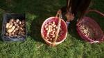 034-frutti-dellorto
