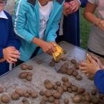 5_pulizia-patate